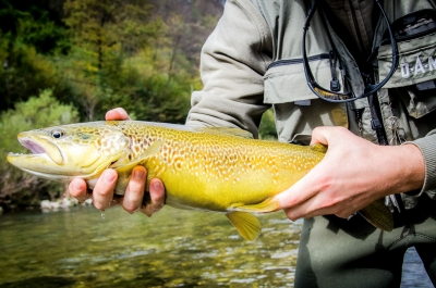 Angeln in Slowenien - Idrijca, Fluss der Marmorata